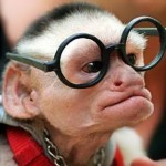voor aap lopen met je nieuwe bril